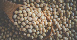 Lécithine de soja : bon pour la santé ou dangereux